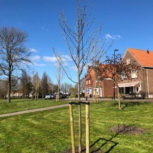 Herplante bomen 4